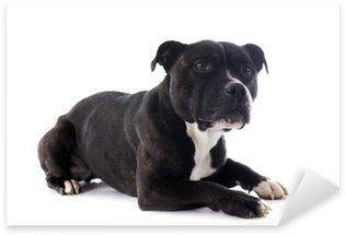 Naklejka Staffordshire bull terrier