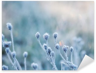 Naklejka Pixerstick Streszczenie naturalne z zamrożonych roślin lub pokryte szronem rym