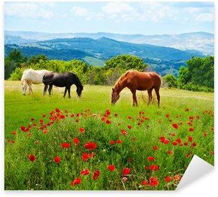 Naklejka Tam trawa wypas koni