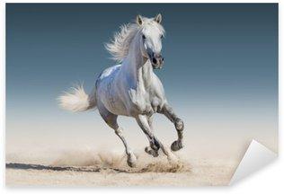 Naklejka Uruchomić biały koń galop
