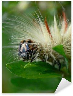 Naklejka Włochate gąsienice