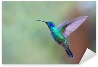 Naklejka Pixerstick Zielona Violetear koliber w locie w Kostaryce