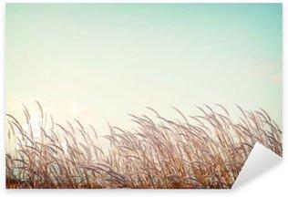 Nálepka Abstraktní vintage pozadí přírody - měkkost bílé pírko trávy s retro modrou oblohou prostor