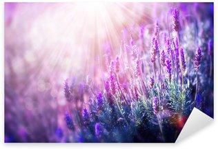 Nálepka Lavender květiny pole. Pěstování a kvetoucí levandule