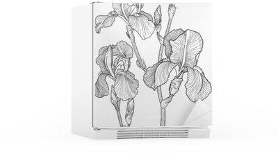 Nálepka na Ledničku Náčrt kytice rozkvetlých kosatců