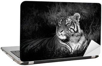 Nálepka na Notebook Černobílý obraz Bengálský tygr