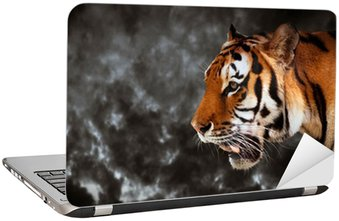 Nálepka na Notebook Divoký tygr hledá, připraven k lovu, boční pohled. zatažené obloze