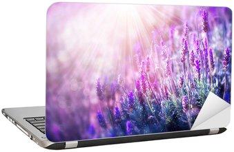 Nálepka na Notebook Lavender květiny pole. Pěstování a kvetoucí levandule