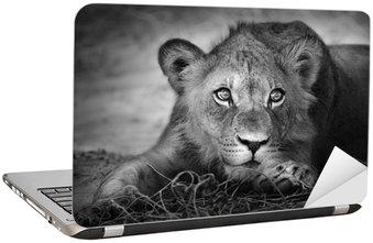 Nálepka na Notebook Mladý lev portrét