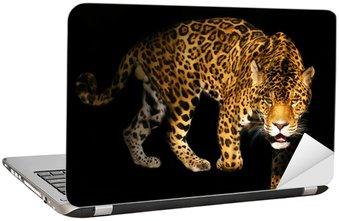 Nálepka na Notebook Rozzlobený divoké panther na černém pozadí