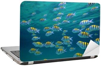Nálepka na Notebook Seržant Major ryby
