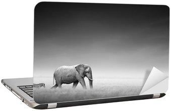 Nálepka na Notebook Slon se zebrou (Artistic zpracování)