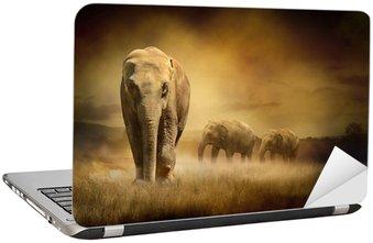 Nálepka na Notebook Sloni při západu slunce