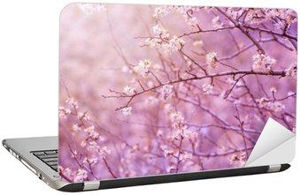 Nálepka na Notebook Třešeň květ