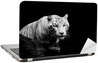 Nálepka na Notebook White tiger