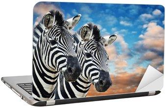 Nálepka na Notebook Zebry ve volné přírodě