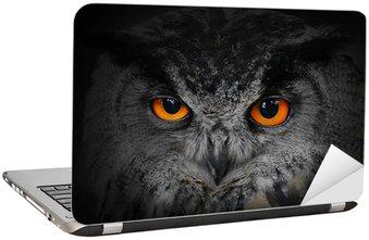 Nálepka na Notebook Zlé oči. (Eagle Owl, Bubo bubo).