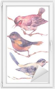 Nálepka na Sklo a Okna Sada barevných akvarelů ptáci na bílém