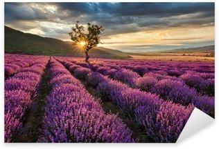 Nálepka Pixerstick Ohromující krajina s levandulí pole při východu slunce