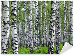 Nálepka Pixerstick Pěkné letní březového lesa