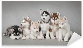 Nálepka Pixerstick Sibiřský husky psa štěně