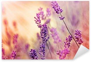 Nálepka Soft zaměření na krásné levandule a sluneční paprsky - sluneční paprsky