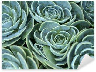 Nálepka Sukulentní rostlina