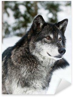 Nálepka Pixerstick Vlk
