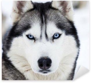 Nálepka Pixerstick Zblízka na modrých očích husky