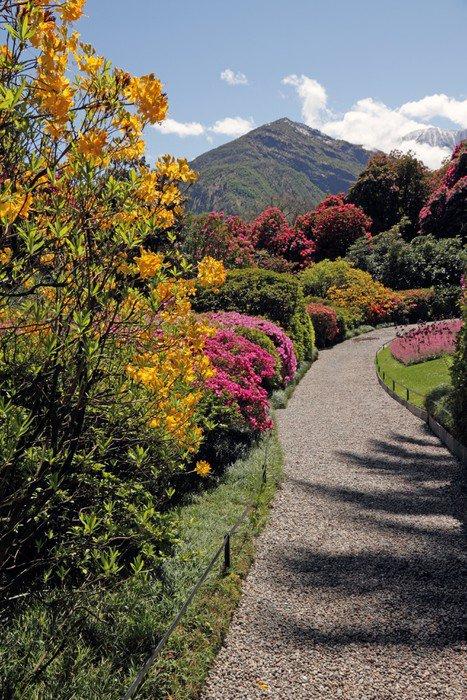 Obraz na Płótnie Niepowtarzalny krajobraz z azalii i rododendronów w ogrodzie - Tematy