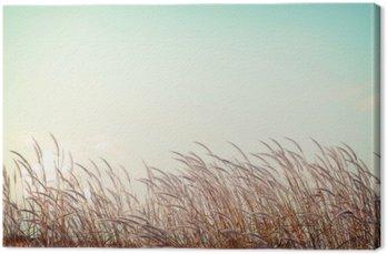 Obraz na Plátně Abstraktní vintage pozadí přírody - měkkost bílé pírko trávy s retro modrou oblohou prostor