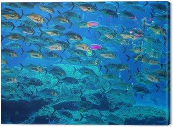 Obraz na Plátně Akvárium tropické ryby na korálovém útesu