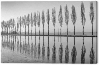 Obraz na Plátně Alberi Riflessi sul Lago all'alba v bianco e nero