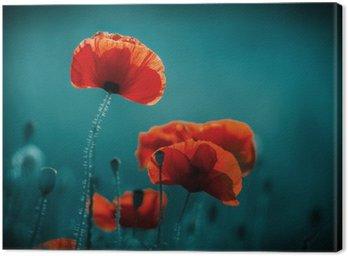 Obraz na Plátně Amazing makové pole. Letní květiny.