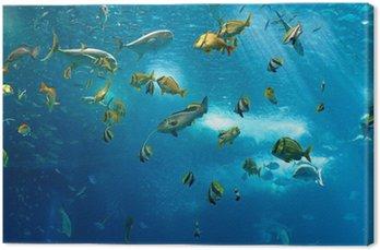 Obraz na Plátně Barevné Ryby