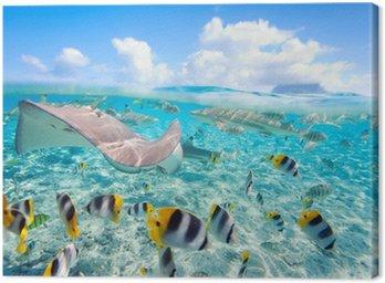 Obraz na Plátně Bora Bora pod vodou