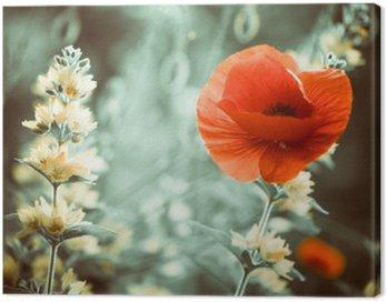 Obraz na Plátně Červený mák květiny na zahradě západu slunce