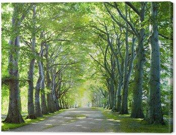 Obraz na Plátně Cesta v lese