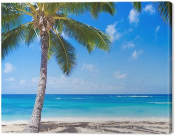 Obraz na Plátně Coconut Palm tree na písečné pláži na Havaji