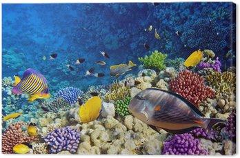 Obraz na Plátně Coral a ryby v Rudém Sea.Egypt