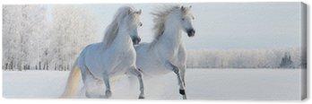 Obraz na Plátně Dva bílí poníci cval