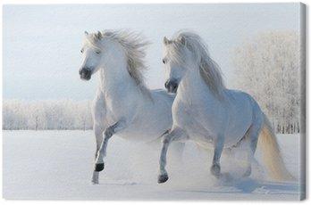 Obraz na Plátně Dvě bílé koně cval na sněhu pole