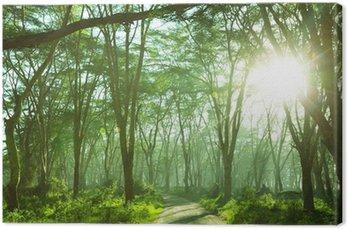 Obraz na Plátně Džungle