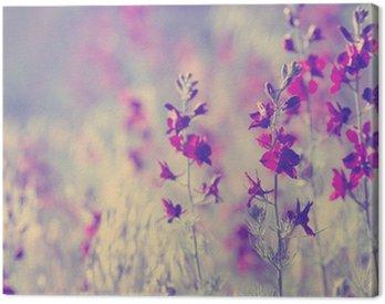 Obraz na Plátně Fialové divokých květin
