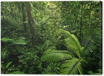 Obraz na Plátně Hustý Tropical Rain Forest