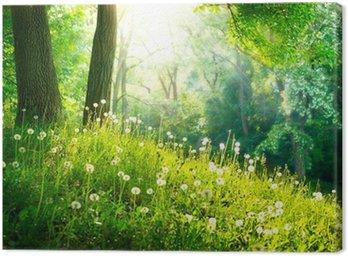 Obraz na Plátně Jarní přírody. Krásná krajina. Zelená tráva a stromy