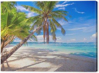 Obraz na Plátně Kokosová palma na bílé písečné pláži