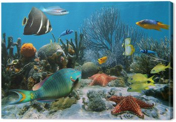 Obraz na Plátně Korálový útes a hvězdice