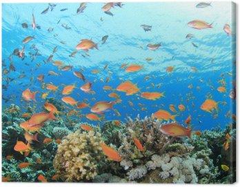 Obraz na Plátně Korálový útes pod vodou