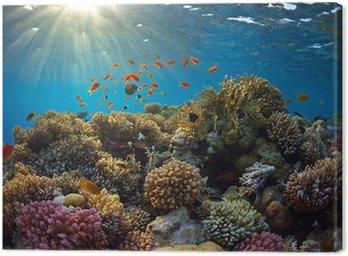 Obraz na Plátně Korálový útes